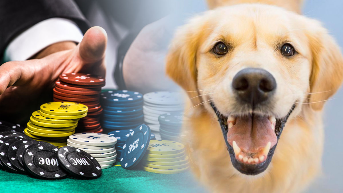 A Dog and Poker Chips